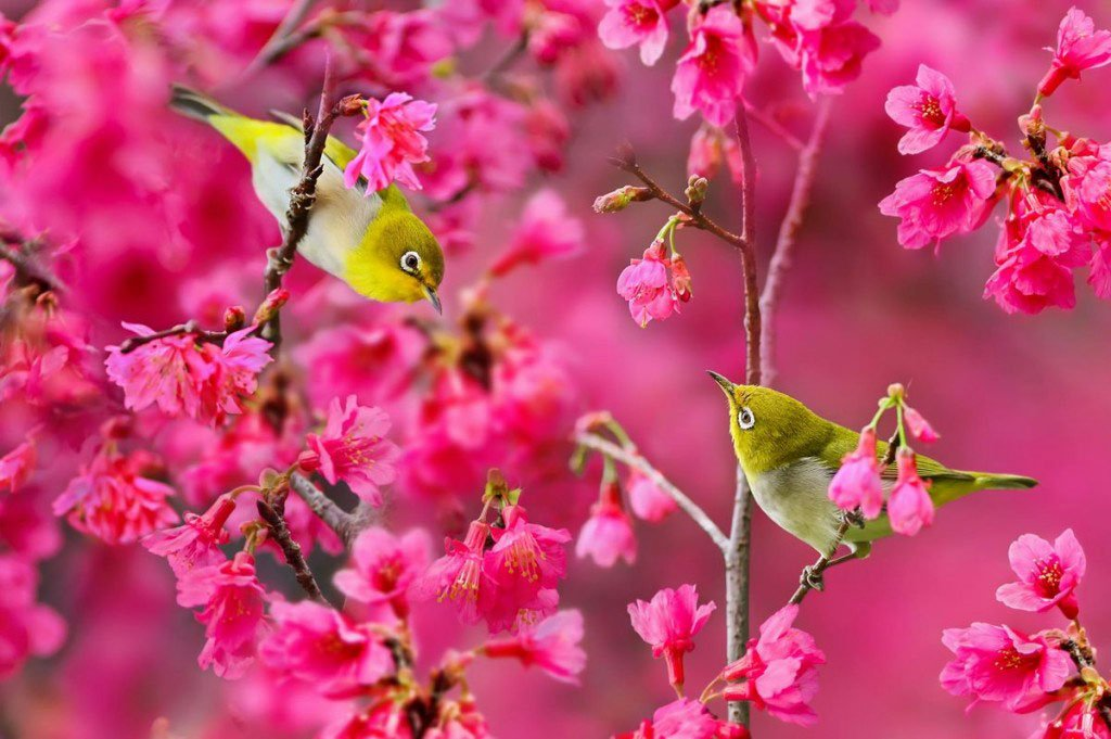 Những bài thơ hay về mùa xuân